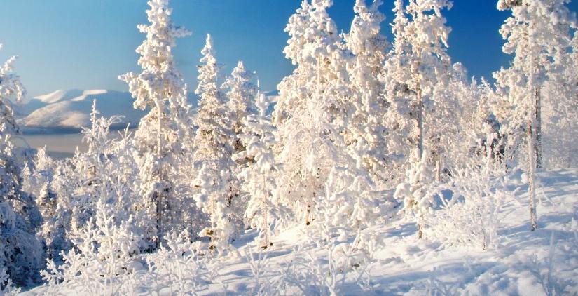 La neige de printemps dans les arbres